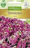 Chrestensen Steinkraut 'Violett'