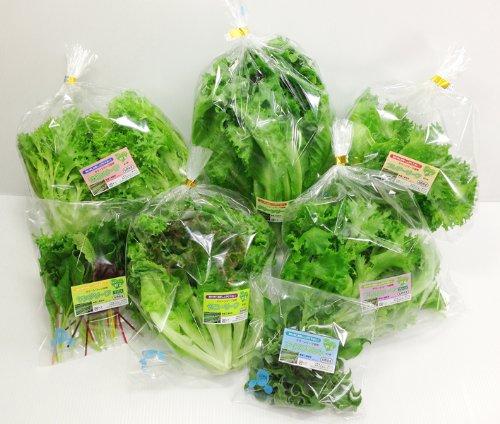 クリーンリーフギフト40 洗わずに丸ごと全部食べられる、野菜そのものの新鮮な美味しさが自慢