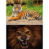 GREAT ART 2er Set XXL Poster – Wildkatzen – Tiger &