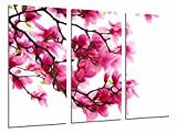 Cuadro Fotográfico Fondo Blanco con Flores Rosas en Naturaleza, Almendro Tamaño total: 97 x 62 cm XXL, Multicolor