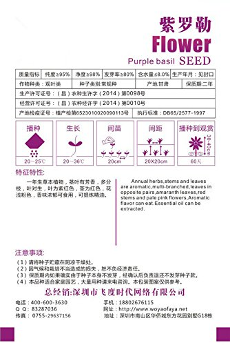 Chinese Herb Violet Sweet Basil Seed Ocimum gratissimum Paquet ~ 1 35 Graines ~