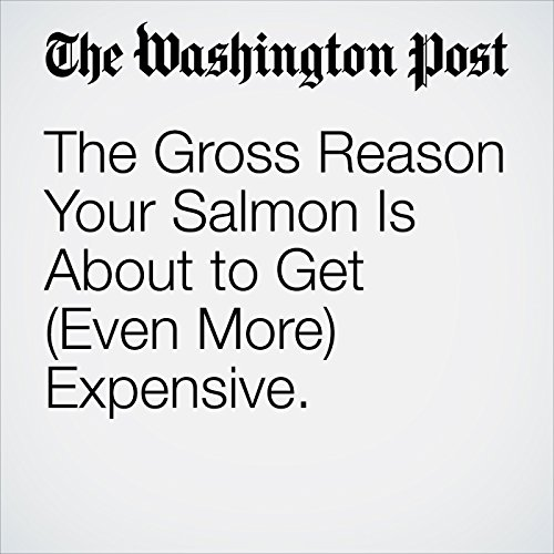 The Gross Reason Your Salmon Is About to Get (Even More) Expensive. copertina