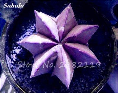 Succulentes graines fraîches 200 Pcs étoile à cinq branches charnus Graines rares Sempervivum Mix-kinds Fleurs Succulent Bonsai Plantes 7 pot