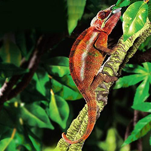 raspbery Reptil Escalada Vid Selva Artificial Selva Vides Curva Flexible Rama Reptil Terrario Jaula Caja Hábitat Decoración Accesorios para Lizard Frog Snake Improvement