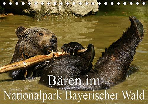 Bären im Nationalpark Bayerischer Wald (Tischkalender 2021 DIN A5 quer)