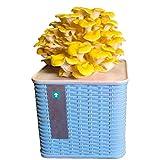 DBXOKK Kit de cultivo de hongos en interior orgánico, mini hongos ostras esporas de micelio Spawn Bonsai, todo está incluido, solo agregue agua, hongo reishi(6)