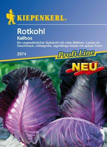 Rotkohl \'Kalibos\'