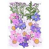 ZYHDFH 34 Stück Gemischt Getrocknete Blüten Gemischte Getrocknete Blätter Natürliche Gepresste...