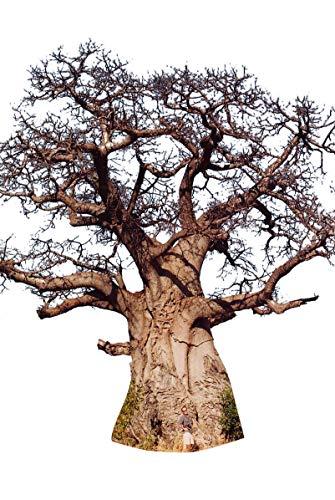 Afrikanische Affenbrotbaum (Adansonia digitata) 10 Samen