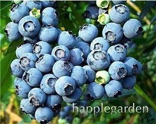 Bloom Green Co. Â¡Venta!100 Unids/bolsa Arándano Bonsái Comestible Orgánico Herencia Fruta planta Enano Arándano Bonsai Ãrbol Planta en maceta para el jardín de su casa: 12