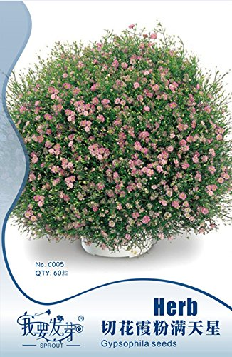 Rose Gypsophila Cut-fleur Semences, paquet d'origine, 60 graines / Pack, Bonsai Babys Breath # ID020