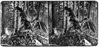HistoricalFindings Photo: Photo of Stereograph,Stuffed Eagle,Wildcat,Forest Setting,Animals,Taxidermy,1871