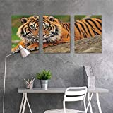 HOMEDD Canvas Pictures Sticker Murals,Tiger Noble Beast Crouching on a Rock Sumatrian Large Cat Beautiful Nature Photography,for Living Room,Dinning Room, Bedroom 3 Panels,16x31inchx3pcs Multicolor
