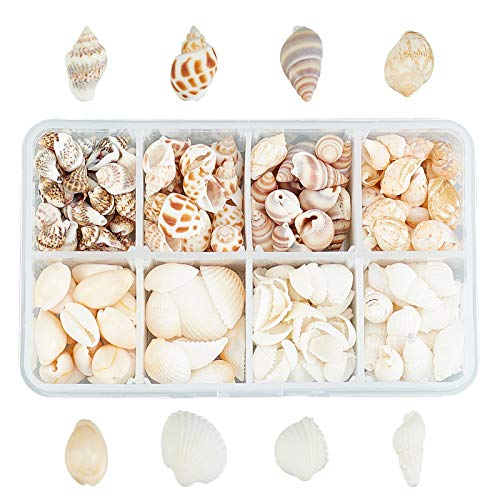 SUPERFINDINGS Aproximadamente 244PCS 8 Estilos Cuentas de Concha de Concha Natural Color Mezclado Sin Orificio Concha En Espiral del Océano Conchas de Mar Charms Beads Cuentas de Concha Natural