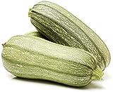 50 pezzi di semi di zucchine verdi piantare verdure essenziali tutto l'anno impollinazione aperta facile raccolta fattorie da giardino adatte