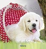 Hunde 2020: aufstellbarer Postkartenkalender