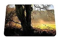 22cmx18cm マウスパッド (木太陽夜明けビームアイビートランク空き地) パターンカスタムの マウスパッド