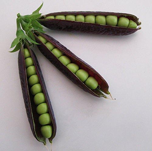FASH LADY Graines Paquet: Violet pods Pois rares Hierloom Cultures énormes organiques Top Saveur 50 graines fraîches