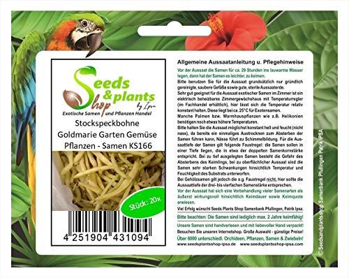 Stk - 20x Stockspeckbohne Goldmarie Garten Gemüse Pflanzen - Samen KS166 - Seeds Plants Shop Samenbank Pfullingen Patrik Ipsa