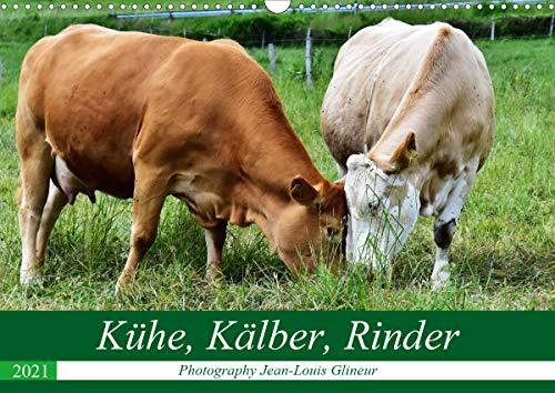 Kühe, Kälber, Rinder (Wandkalender 2021 DIN A3 quer)
