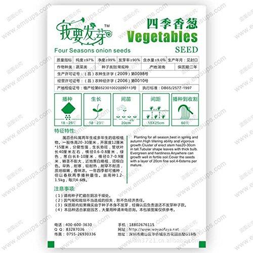 graines végétales échalote bio, quatre saisons de graines de ciboulette, graines d'oignon, je veux pousser package d'origine, 120 particules / sac