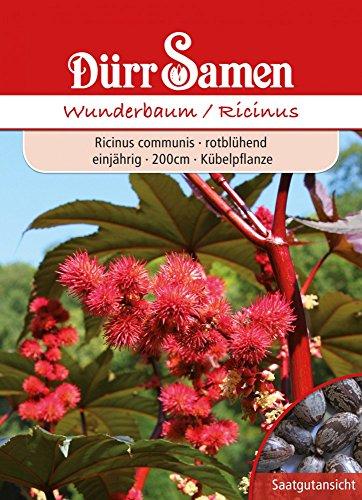 Wunderbaum rot Ricinus communis