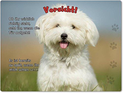 Merchandise for Fans Blechschild/Warnschild/Türschild - Aluminium - 20x30cm - mit Spruch - Motiv: Hund Malteser - 01