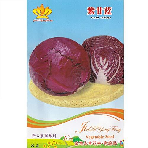FERRY HOCH KEIMUNG Seeds Nicht NUR Pflanzen: Rotkohl * 1 Packet 30 & # 39; s (PC) * ICA * Küche Garten * Gemüse: 1 Packet