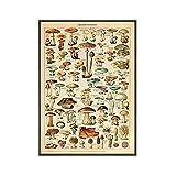 Vintage Poster Art Print Botánico Educativo Setas Hongos Ilustración Pintura Arte Pasillo Decoración de la sala de estar (70x90cm) Sin marco