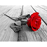 Papel Pintado Fotográfico Rosa de flores 352 x 250 cm Tipo Fleece no-trenzado Salón Dormitorio Despacho Pasillo Decoración murales decoración de paredes moderna - 100% FABRICADO EN ALEMANIA - 9060011a
