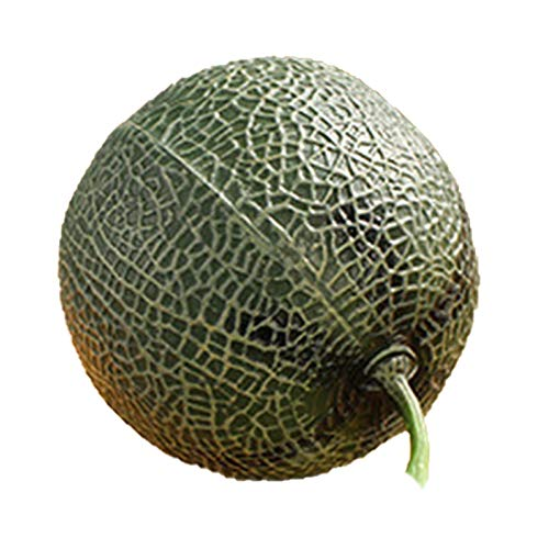 Frutta finta Frutti realistici alla ricerca realistica Frutti artificiali Foam Moam Mould per la decorazione della festa di Natale Frutta Modle per il servizio fotografico - Hami melone