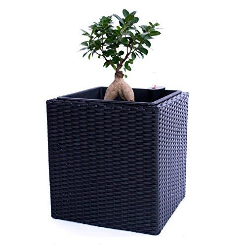 Elegant Einrichten Pflanzkübel Polyrattan quadratisch 30x30x30cm schwarz.
