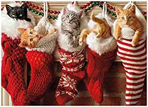 Amazon Com Christmas Cards With Cats