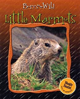 Little Marmots (Born to Be Wild)