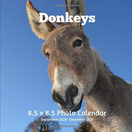 Donkeys 8.5 X  8.5 Calendar September 2020 -December 2021: Monthly Calendar with U.S./UK/ Canadian/Christian/Jewish/Muslim Holidays-Horses Animal Nature