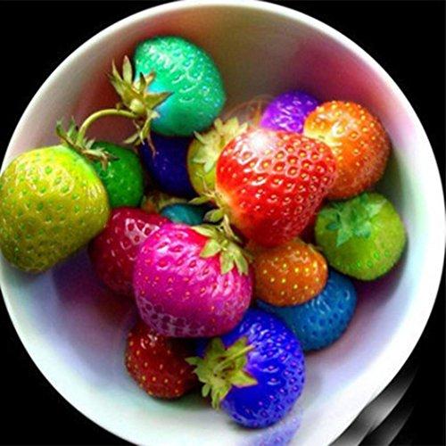Acecoree Samen Haus- 100 Stück 50 Stück Bio-Erdbeere Obst Samen,Selten Riesen Erdbeerdekoration Raritäten Erdbeere Samen Frucht Obstsamen für Balkon,Garten