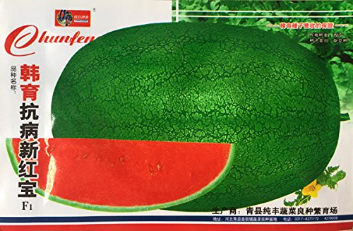 (Orden de la mezcla mínima de 5) 1 paquete de semillas + 50 piezas originales de la fruta de la sandía sin pepitas melon13 agua Azúcar% Juicy Water Melon envío libre