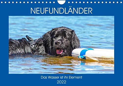 Neufundländer - Das Wasser ist ihr Element (Wandkalender 2022 DIN A4 quer)