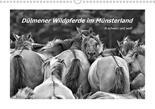 Dülmener Wildpferde im Münsterland in schwarz und weiß (Wandkalender 2021 DIN A3 quer)