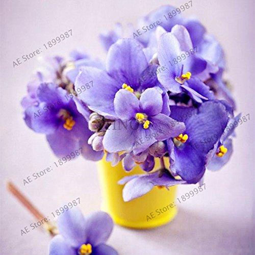 Couleur mixte, Graines Violet, Matthiola Incana semences, plantes vivaces bonsaï pour la maison et la plantation de jardin 50pcs/sac 6