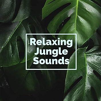 Relaxing Jungle Sounds