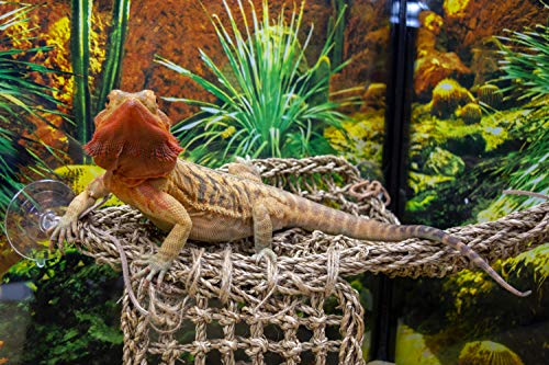 Penn Plax REP701 Lizard Lounger, 100% Natural Seagrass Fibers For Anoles, Bearded Dragons, Geckos, Iguanas, and Hermit Crabs Triangular 14 x 14 Inches Large