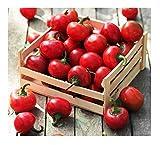 Red Cherry Hot...image