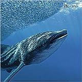 1art1 Haifische - Walhai, Venezuela Poster Kunstdruck 30 x