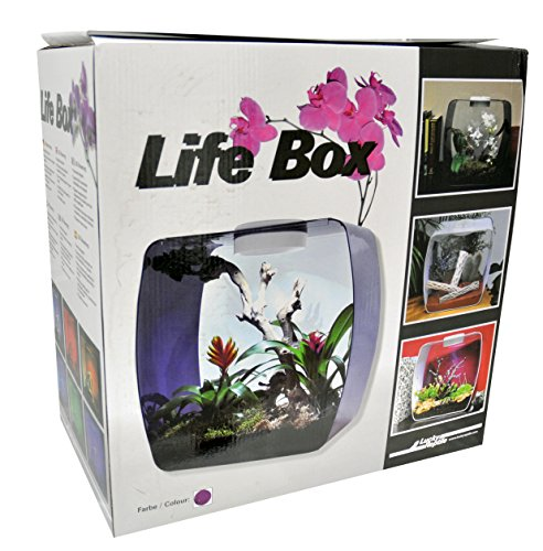 Lucky Reptile Life Box Terrarium Design