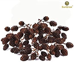 SunGrow Alder Cones for Shrimps - Promote Breeding in Freshwater Tanks - Lowers pH Level in Tank Environment - Perfect for Both Big & Small Aquariums - Adds Aesthetic Value