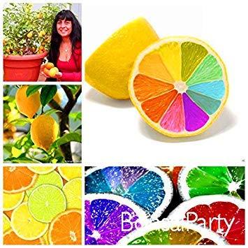 Big Sale! 10 Pcs / Lot, rares graines arc de citron fruits bio graines d'arbres de citron maison jardin plantes fruitières coloré Bonsai, # 9HML13