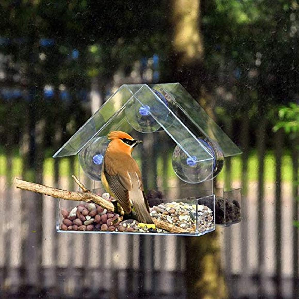 Cacys-Store - Creative Window Bird Feeders Sale Clear Glass Window Viewing Bird Feed el Table Seed Peanut Hanging Suction For Pet Bird