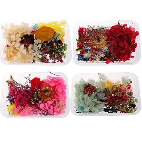 Poluka 4 cajas de flores prensadas secas coloridas para joyería colgante, manualidades, manualidades, álbumes de recortes, decoración de velas