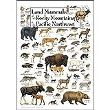 Earth Sky + Water Poster - Land Säugetiere der Rocky